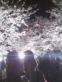 夜桜day2???