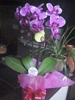 お花を買う